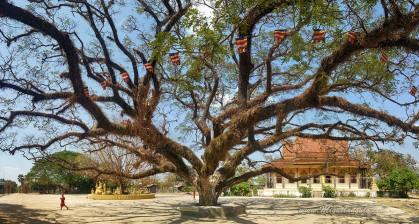 Kratie Sambour (+/- 40 km au N de Kratie) : temple bouddiste Vihea Kaok